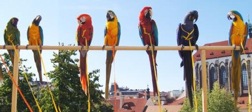 Vystoupení s papoušky...